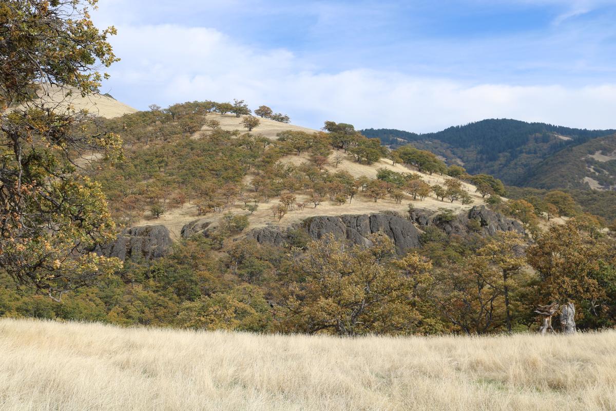 Basalt cliffs amoungst Oregon White Oaks