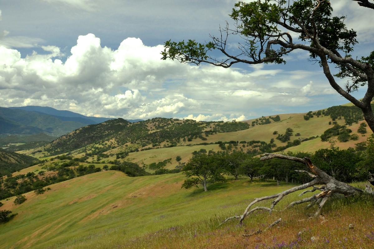 Sampson Creek Preserve Landscape