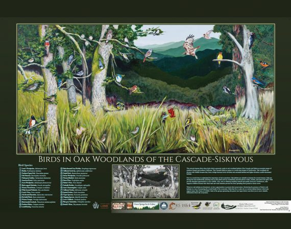Birds in Oak Woodlands of the Cascade-Siskiyous poster by Deb Van Poolen