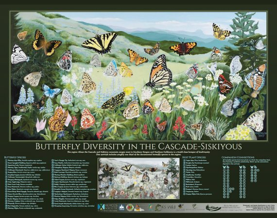 Butterfly Diversity in the Cascade-Siskiyous poster by Deb Van Poolen
