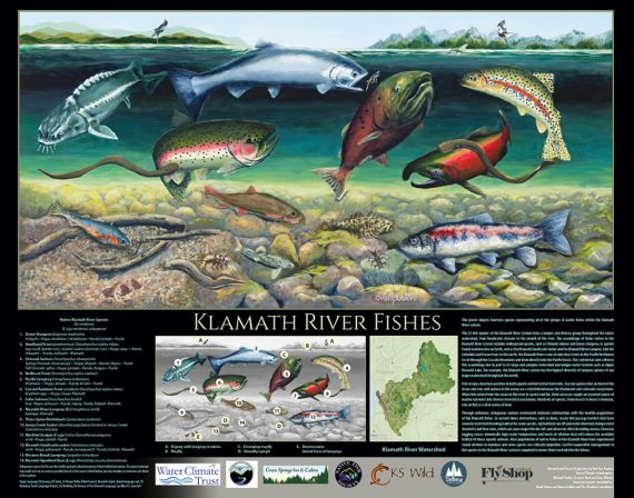 Klamath River Fishes poster by Deb Van Poolen