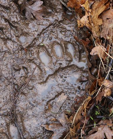 Visit Sampson Creek Preserve